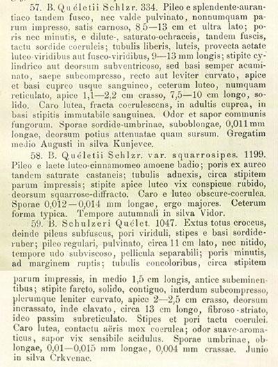 Boletus queletii von Schulzer für Quélet