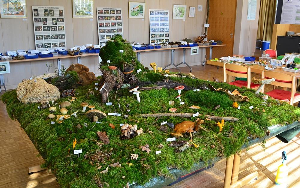 Termine zum Europäischen Pilztag – Pilzausstellungen, Pilzexkursionen
